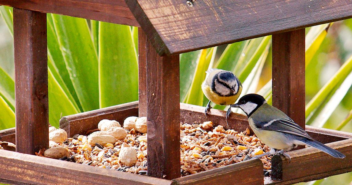 Best Bird Table